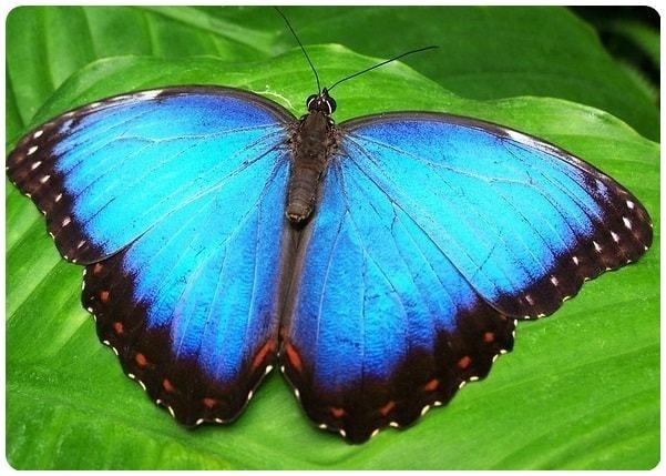 Himmelsfalter im Schmetterlingspark Klütz bei Boltenhagen