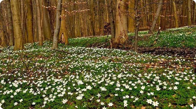 Ausflugsziele im Moidentiner Wald