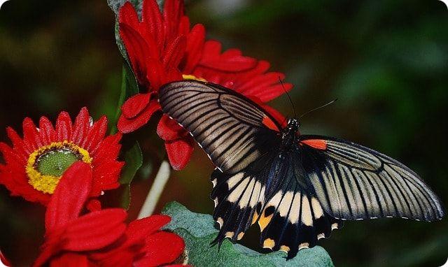 Schmetterling im botanischen Garten von Kiel