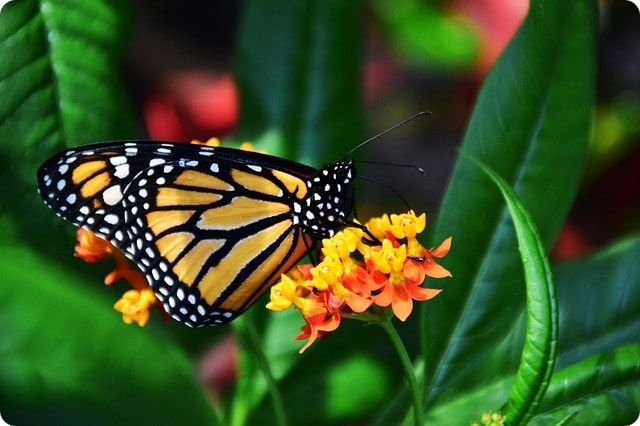Der Schmetterlingspark in Klütz bei Boltenhagen