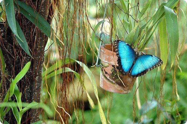 Im Schmetterlingspark Klütz