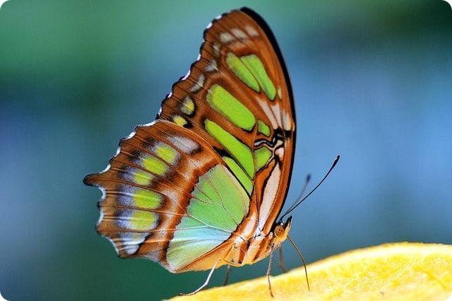 tropischer Schmetterlingspark in Sassnitz bei Stralsund
