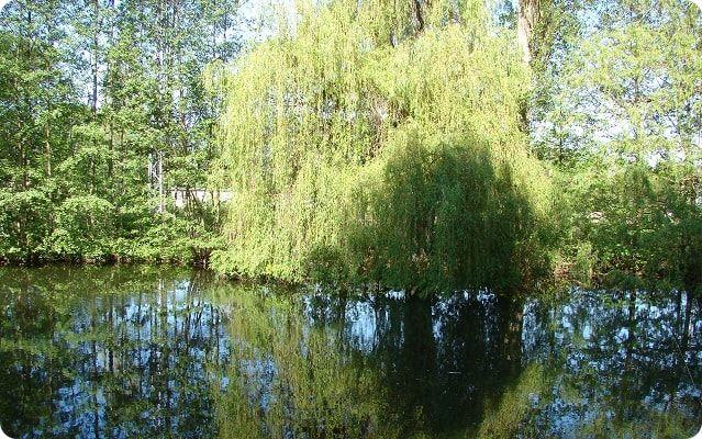 Der Lindengarten in Wismar